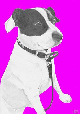 Jack Russell Drawing - Jack Russell Cross With Pink Background by David Smith