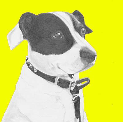 Spaniel Drawing - Jack Russell Crossbreed In Yellow Headshot by David Smith