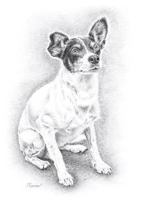 Animals Drawings - Jack Russell by Casey