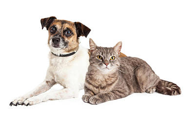 Jack Russell Terrier Dog And Tabby Cat Art Print by Susan Schmitz