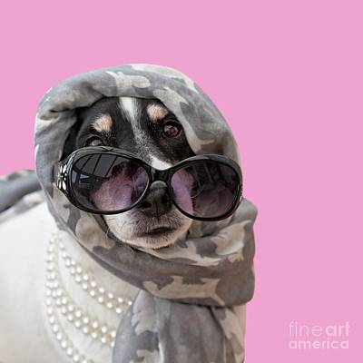 Photograph - Jack Russell Terrier Dog Headscarf Shades And Beads by Natalie Kinnear