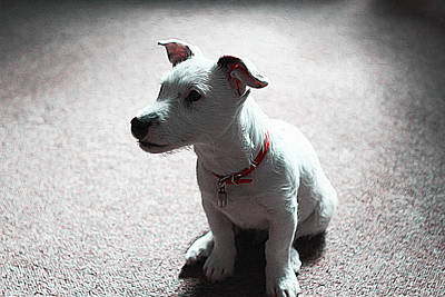 Jack Russell Terrier Digital Art - Jack Russell Terrier Pup by Iguanna Espinosa