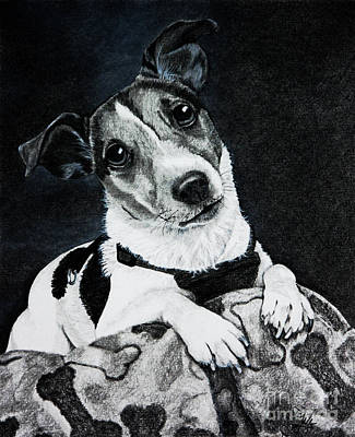 Drawing - Jack Russell Terrier by Terri Mills