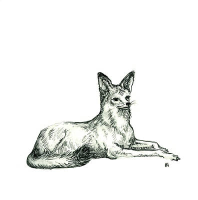 Jackal Sketch Art Print by Shirley Heyn