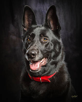 German Shepherd Photograph - Jackaroe by Everet Regal