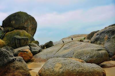 Photograph - Jackass Penguins by JAMART Photography