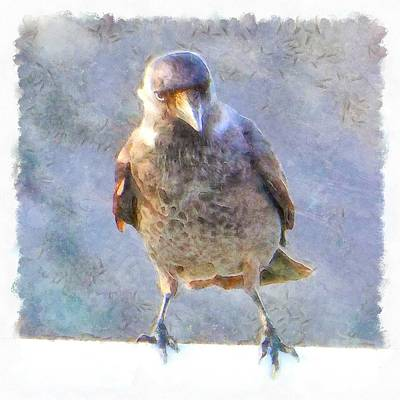 Painting - Jackdaw Watercolor by Taiche Acrylic Art