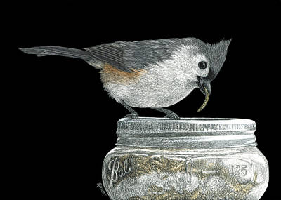 Tufted Titmouse Drawing - Jackpot by Ann Ranlett