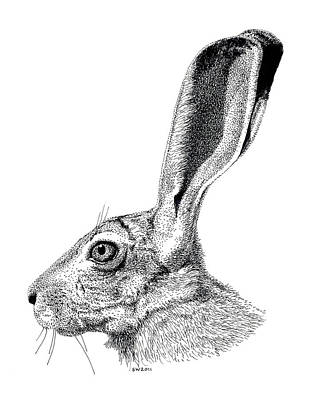 Drawing - Jackrabbit by Scott Woyak