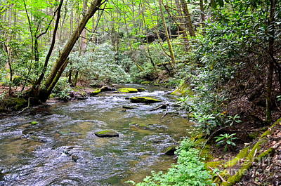 Photograph - Jacks River On Dyer Mountain by Carol  Bradley