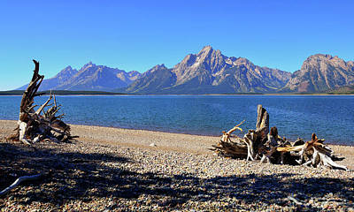 Photograph - Jackson Lake Shore by Greg Norrell