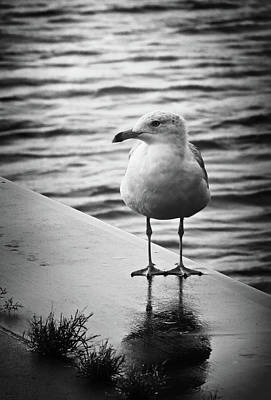 Photograph - Jackson Street Pier Seagull by Shawna Rowe