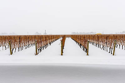 Jackson-triggs Winery Niagara Estates Art Print