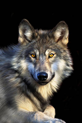 Wolves Digital Art - Jacob by Julie L Hoddinott