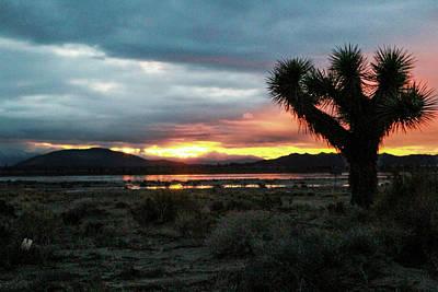 Photograph - Jacob Tree Sunset - El Mirage by Jeff Kurtz