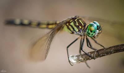Photograph - Jade Eyes by Philip Rispin