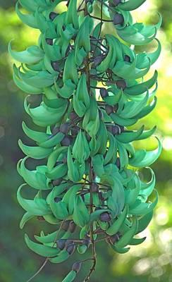 Jade Vine Art Print by Denise Clark