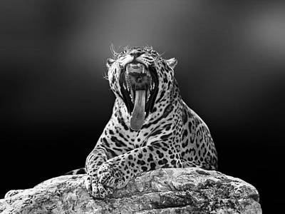 Panthera Photograph - Jagaur 3 by Ivan Vukelic