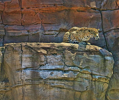 Photograph - Jaguar # 1 by Allen Beatty