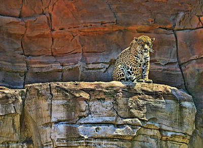 Photograph - Jaguar # 2 by Allen Beatty