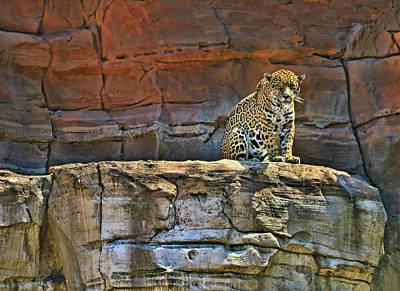 Photograph - Jaguar # 2 by Allen Beatty