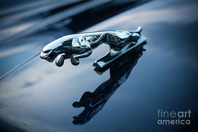 Photograph - Jaguar Car Mascot by Colleen Kammerer