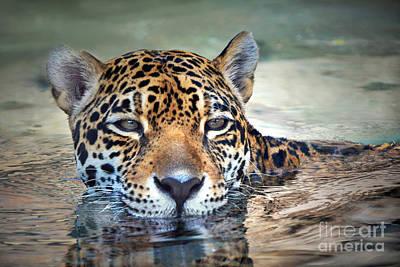 Jaguar Cooldown Art Print by Dan Holm
