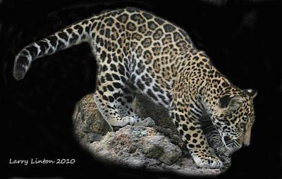 Jaguar Cub Art Print by Larry Linton