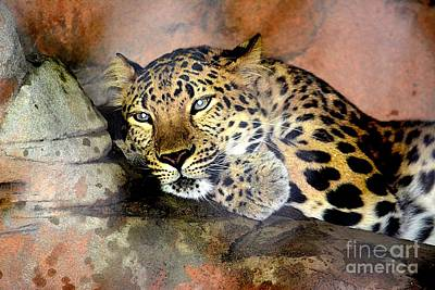 Photograph - Jaguar,   by Janice Spivey