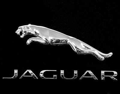 Photograph - Jaguar Monochrome by Rospotte Photography