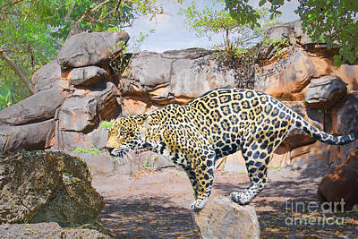 Photograph - Jaguar On The Rocks by Judy Kay