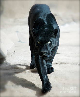 Photograph - Jaguar by Pamela Walrath