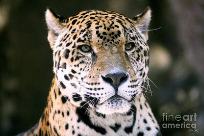 Jaguar Print by Scott Pellegrin