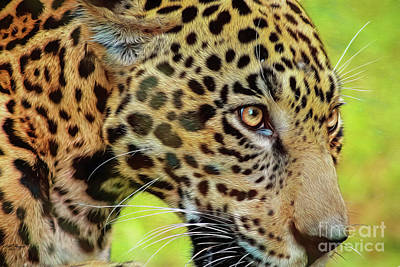 Mixed Media - Jaguar Up Very Close by Bill And Deb Hayes