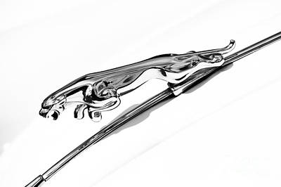Jaguar Xk 150 Hood Ornament  Art Print by Tim Gainey