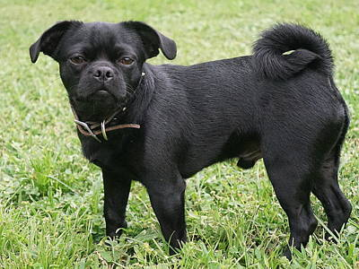 Photograph - Jake The Frug by Laurie Perry