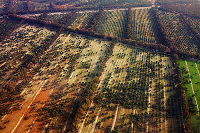 Photograph - Jalalabad Walnut Tree Groves by SR Green