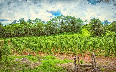 Photograph - Jamaican Vineyard by John M Bailey