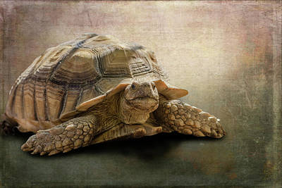 Jamal The Tortoise Art Print by Angela A Stanton