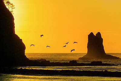 Photograph - James Island And Pelicans by Greg Reed