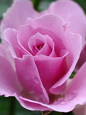 Photograph - James Kelleher Rose Garden  by Juergen Roth