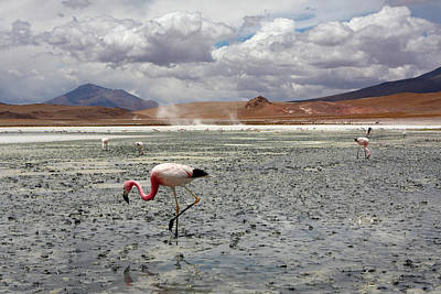 Photograph - James's Flamingo by Aidan Moran
