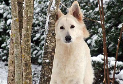 White German Shepherd Dog Photograph - Jane Of The Woods... by Margaret Hood