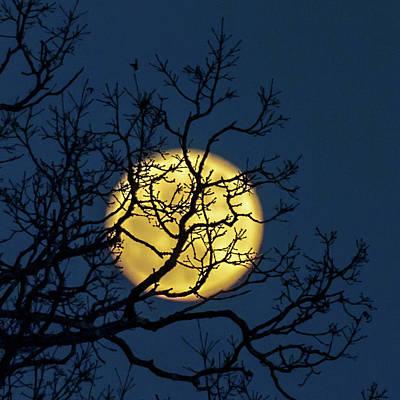 Photograph - Janet's Moon by Lara Ellis