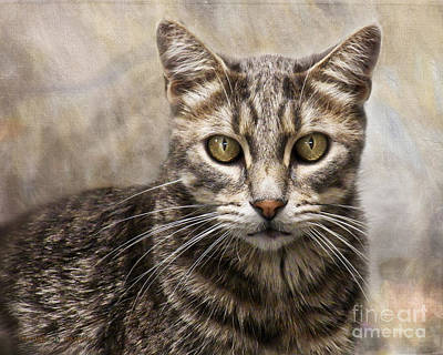 Janie's Kitty Art Print