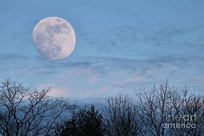 Photograph - January Blue Moon Rising by Sandra Huston