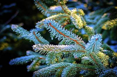 Photograph - January Frost by Craig Perry-Ollila