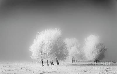 January Frost Art Print