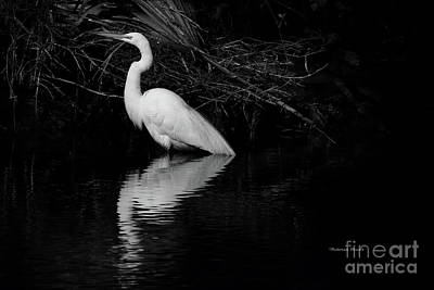 Photograph - January Giant Egret by Deborah Benoit