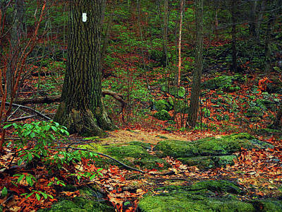 Photograph - January Moss On The Appalachian Trail by Raymond Salani III